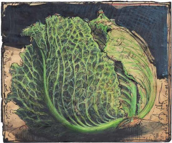 Savoy, or a cabbage feels good