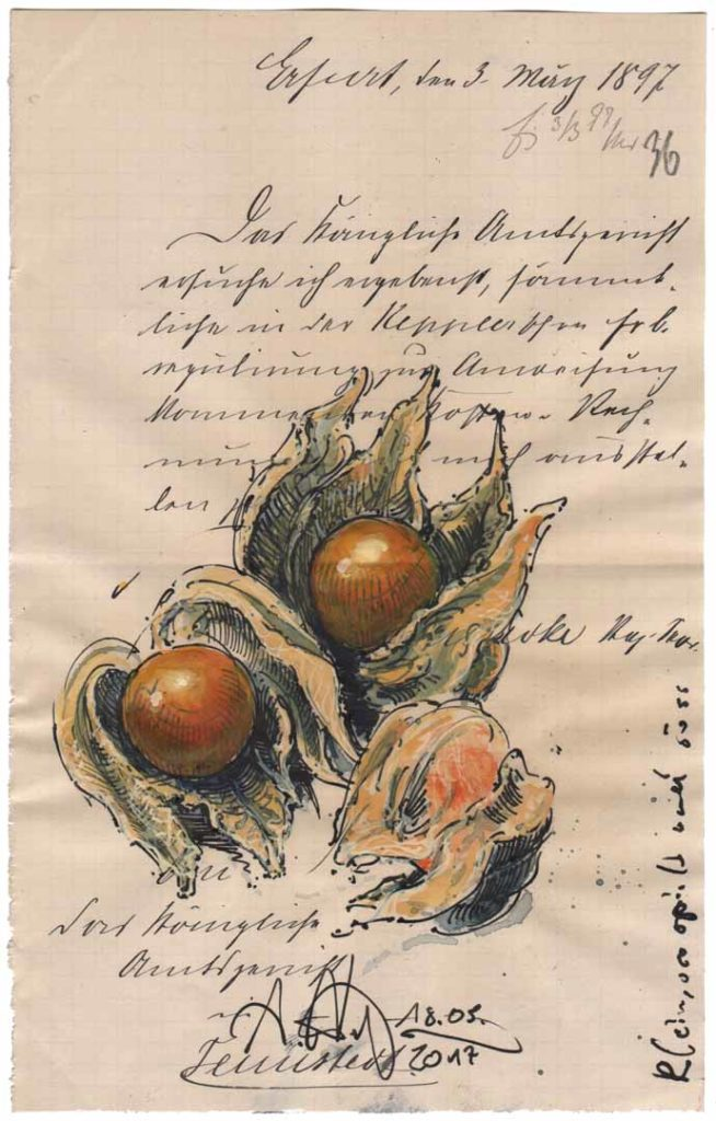 Small, playful and sweet (Physalis)
