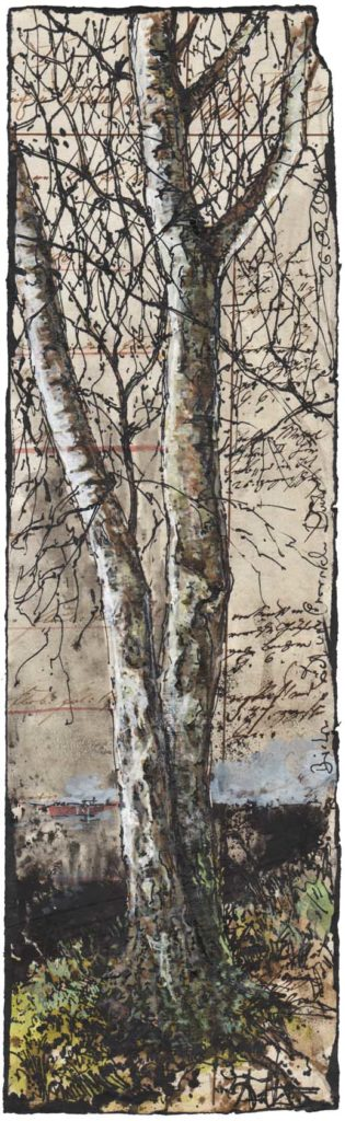 Birch in the change of Darkness